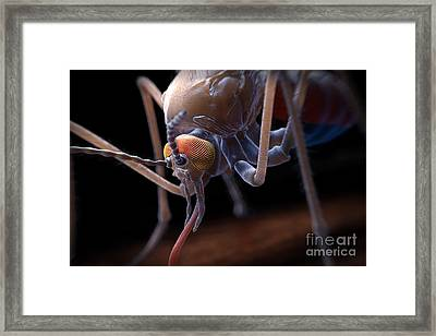 Anopheles Mosquito Framed Print by Science Picture Co