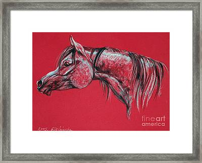 Arabian Horse  Framed Print by Angel  Tarantella