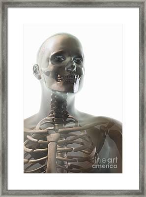 Bones Of The Upper Body Framed Print