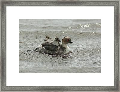 Falkland Islands, Sea Lion Island Framed Print
