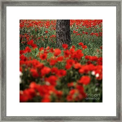 Field Of Poppies Framed Print by Bernard Jaubert