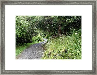 Forest Trail Framed Print by Les Cunliffe