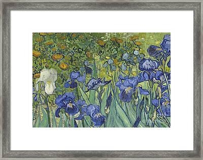 Irises Framed Print by Vincent Van Gogh