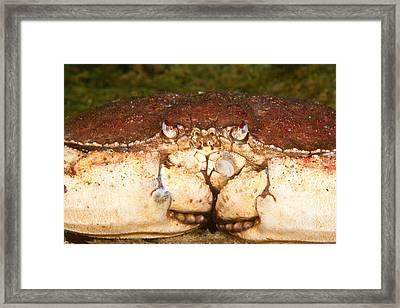 Jonah Crab Framed Print