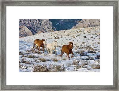 North America, Usa, Wyoming, Shell Framed Print