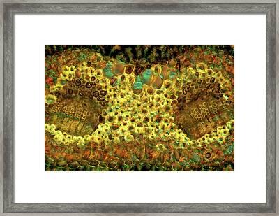 Pine Needle Framed Print by Marek Mis