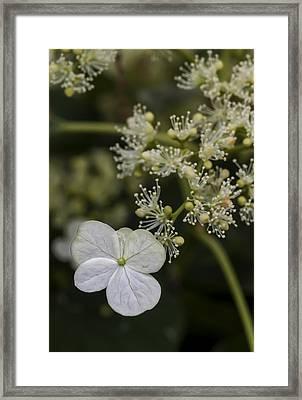 Spring Flowers Framed Print by Robert Ullmann
