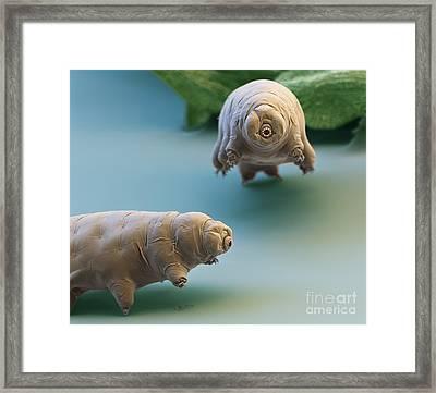 Water Bear Framed Print