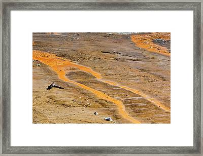 Yellowstone National Park Framed Print by Jim West