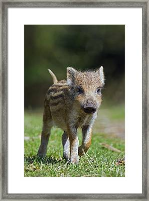130109p243 Framed Print by Arterra Picture Library