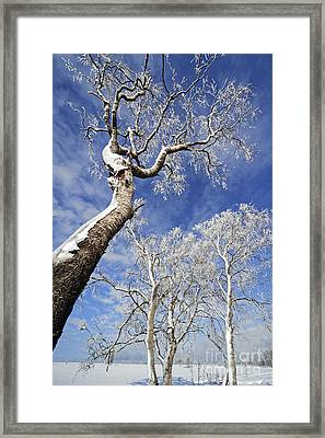 130201p343 Framed Print by Arterra Picture Library
