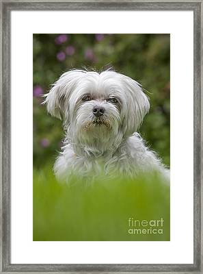 130918p024 Framed Print by Arterra Picture Library