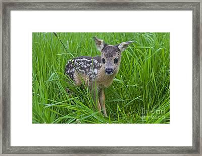 131018p162 Framed Print