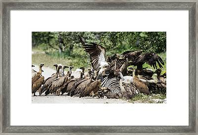 Africa, Namibia, Etosha National Park Framed Print by Jaynes Gallery