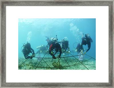 Biorock Reef Restoration, Indonesia Framed Print
