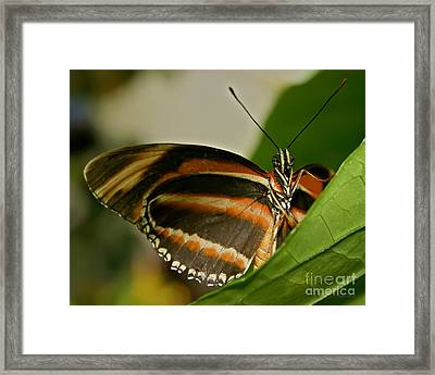 Framed Print featuring the photograph Butterfly by Olga Hamilton