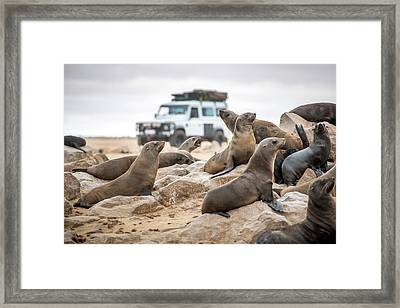 Cape Cross, Namibia, Africa - Cape Fur Framed Print by Edwin Remsberg