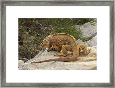 Ecuador, Galapagos National Park Framed Print by Jaynes Gallery