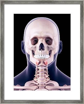 Facial Muscles Framed Print by Sebastian Kaulitzki/science Photo Library