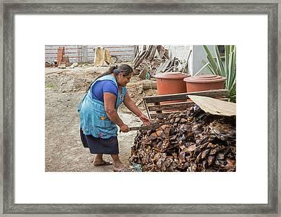 Mezcal Distillery Framed Print by Jim West