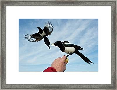 Nature And Wildlife Framed Print