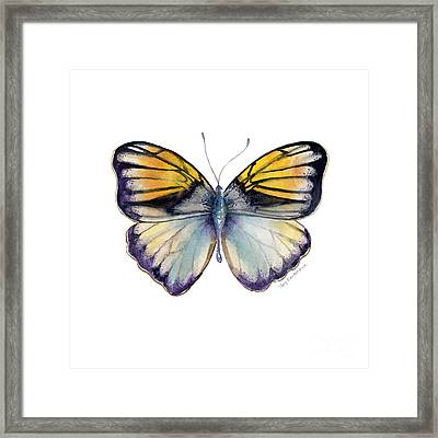 14 Pieridae Butterfly Framed Print by Amy Kirkpatrick