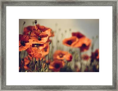 Poppy Meadow Framed Print