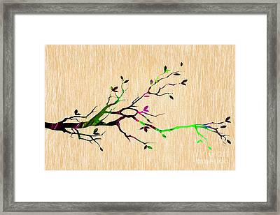 Tree Branch Collection Framed Print