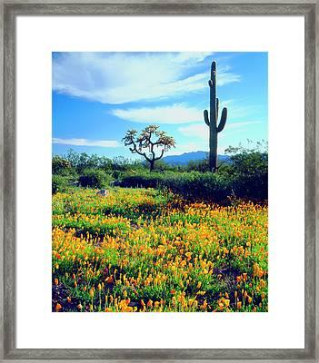 Usa, Arizona, Organ Pipe Cactus Framed Print by Jaynes Gallery