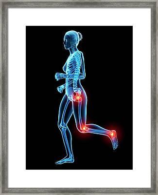 Human Skeletal System Framed Print