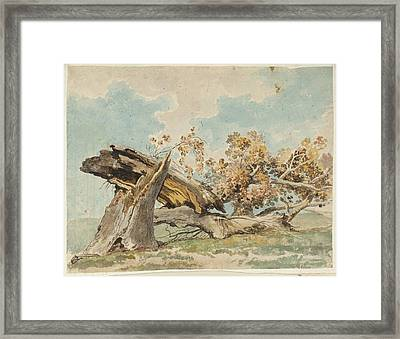 A Fallen Tree Null Carlo Labruzzi Framed Print