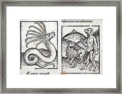 1491 Hortus Sanitatis Monsters Framed Print by Paul D Stewart