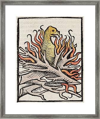 1491 Phoenix In Flames Hortus Sanitatis Framed Print by Paul D Stewart