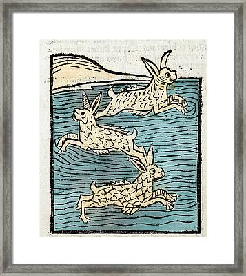 1491 Sea Hares From Hortus Sanitatis Framed Print