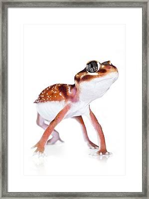 Australian Reptiles On White Framed Print by Shannon Benson