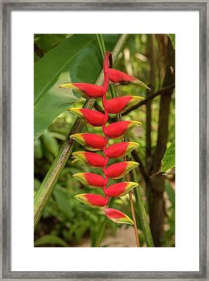 Central America, Honduras, Roatan Framed Print by Jim Engelbrecht