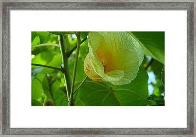 Color Of The Spring Framed Print