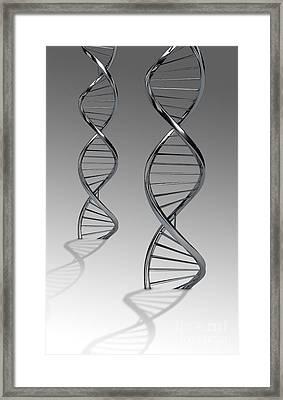 Conceptual Image Of Dna Framed Print by Stocktrek Images