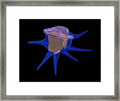 Diatom, Sem Framed Print by Science Photo Library
