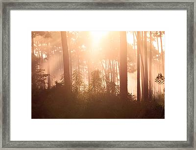 Foggy Sunrise At Long Pine Key Framed Print by Jonathan Gewirtz