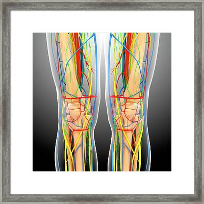 Knee Anatomy Framed Print by Pixologicstudio/science Photo Library