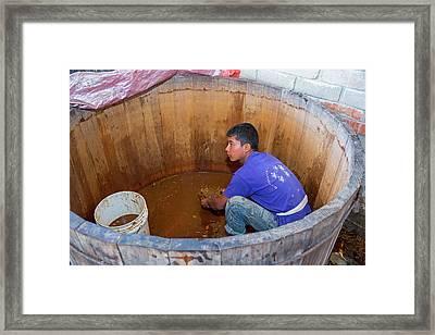 Mezcal Distillery Framed Print