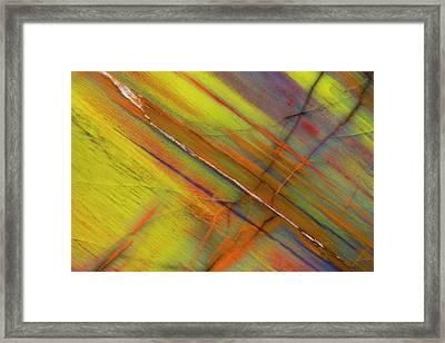 Petrified Wood Close-up Framed Print
