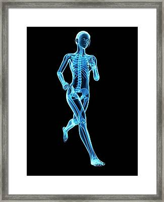 Skeletal System Of A Runner Framed Print