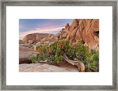Usa, California, Joshua Tree National Framed Print by Jaynes Gallery