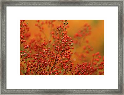 Usa, Pennsylvania Framed Print by Jaynes Gallery
