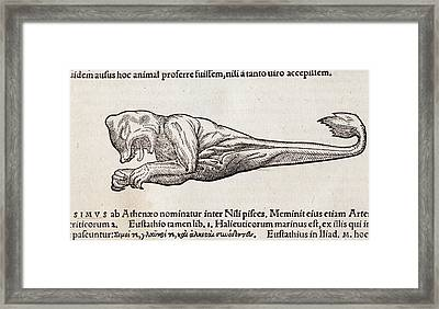 1560 Gesner Foetal Sea Monster Framed Print