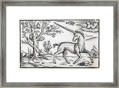 1560 Munster Unicorn Engraving Framed Print by Paul D Stewart