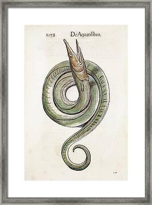 1568 Gesner First Animal Encyclopedia Framed Print by Paul D Stewart