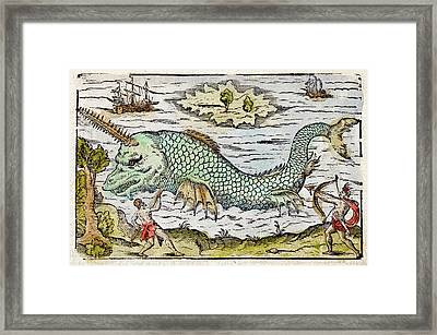1582 Sawfish Pristis As Sea Unicorn Framed Print by Paul D Stewart